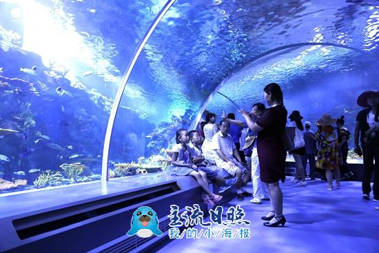 """日照海洋公园动物明星亮相 各个""""身怀绝技"""""""